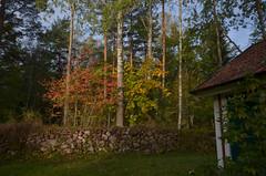 Hytta, høsten 2018 (osloann) Tags: hytte hytta torpet torp moviken trehus