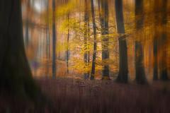 Autumn dream (Thomas Vanderheyden) Tags: dream automne autumn redf orange jaune yellow rouge arbre forest foret nature naturesfinest beautifulearth creation thomasvanderheyden fujifilm pasalaprisedevuelol tree