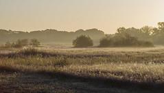 _IMG2366 kopie (Henk de Regt) Tags: the netherlands gelderland natuur nature landscape grass bos forest trees zonsopkomst sunset sundown zonsondergang swamp nederland veluwe landschap gras water bomen moeras