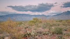 desert twilight (bugeyed_G) Tags: landscape desert twilight nature scrubland cactus mountains arizona southwest