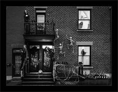 """La nuit d'Halloween.....""""mais où est la queue du chat?"""" (francis_bellin) Tags: 2018 citrouille olympus octobre streetphoto street crânes halloween montréal fantôme rats noiretblanc bw squelettes rue maison peur blackandwhite photoderue"""