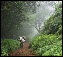 Forest pathway (indianature13) Tags: matheran biosphere 2018 september monsoon maharashtra india westernghats nature indianature nearmumbai forest jungle hills mountains 700m cloud mist flora wildflora monsoonflora panoramapointhike panoramapoint