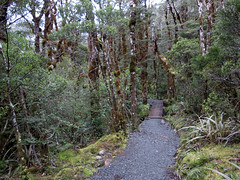 Arthur's Pass Walking Track (treegrow) Tags: newzealand arthurspass lifeonearth nature