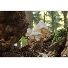 The Group (horstmall) Tags: mushrooms champignon pilz pilze hutpilze wald forest forèt schwäbischealb natur nature swabianalps jura souabe suabe grabenstetten macro makro makroaufnahme horstmall