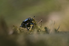 _IMG0089 (andrzejreschke) Tags: insects reptiles plants grass nature butterfly lizard moss flowers beauty beautyofnature