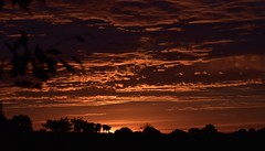 Auf Rindersuche im Morgengrauen; Bergenhusen, Stapelholm (14) (Chironius) Tags: stapelholm bergenhusen schleswigholstein deutschland germany allemagne alemania germania германия niemcy morgendämmerung sonnenaufgang morgengrauen утро morgen morning dawn sunrise matin aube mattina alba ochtend dageraad zonsopgang рассвет восходсолнца amanecer morgens dämmerung himmel sky ciel cielo hemel небо gökyüzü wolken clouds wolke nube nuvole nuage облака silhouette tier rind landwirtschaft klinx explored