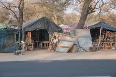 Zone de vente ( Philippe L PhotoGraphy ) Tags: afrique namibie afric namibia désert etosha fauve dunesoiseaux rapace philippelphotography