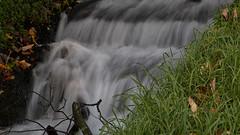 Løbende vand - Running Water (Walter Johannesen) Tags: hald sø morgen natur nature morning skov træ tree træer trees wood