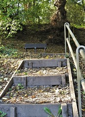 Steps to Woodland Bench - Rest and Be Thankful !! (Gilli8888) Tags: countydurham stanley causeyburn tanfield gibside steps stairway wood nature causey autumn bench seat rest woodland trees northeast nikon coolpix p900