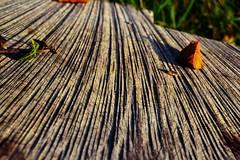 DSC_0056_Fotor (mikkelskytte10) Tags: lines wood tree macro grass forrest