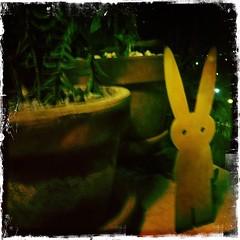 I am Mr Rabbit (Rantz) Tags: rantz mobilography 365 roger doesanyonereadtagsanymore 23onthe23rd victoria melbourne mrrabbit kodotxgrizzledfilm hipstamatic johnslens orange