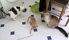 381-June'18 (Silvia Inacio) Tags: mel tabby gata gatos cat cats soneca gato martini kitten