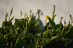 DSC06035 (@saka) Tags: autoupload flowers 73337359 leaves 10791083 street 634637