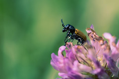 Life of a bug #2 (dali bor) Tags: purple green up close photography macro bug flower