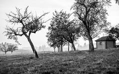 Postcard (Narzouko) Tags: grosdevaud arbre tree switzerland suisse 5d2 canon5dmkii 5014 50mm noiretblanc blackandwhite pdc dof flou diaphragme narzouko nzk bottens vaud maison ancien landscape paysage ambiance sombre gold or