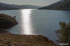"Loch Arkaig gleaming in the early morning. (Scotland by NJC.) Tags: locharkaig lochaber scotland glendessarry sunrise dawn daybreak sunup morning daylight شُروقُ الشَّمْس ""nascer do sol"" 日出 ""izlazak sunca"" ""východ slunce"" solopgang zonsopgang amanecer auringonnousu ""lever du soleil"" sonnenaufgang alba 日の出 peaceful calm still quiet serene undisturbed gentle pleasant soothing tranquil placid restful pacífico 和平的 miran fredelig vredig rauhallinen paisible friedlich ειρηνικόσ 平和な 평화로운 lakes lochs reservoirs waters meres tarns ponds pool lagoon lago 湖 jezero sø meer järvi lac see λίμνη"