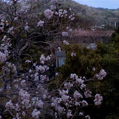 Abril (Neo-noir) Tags: flower flora pink spring macromondays plants naturephotography