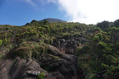 Climbing Mount Pico (beyondhue) Tags: mount pico island climb hike volcano azores azore islands travel lava rock portugal altitude sunny peak montanha