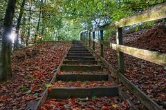 All uphill.............. (michaelsdambach@btinternet.com) Tags: woodland autumn sunnyday congletonpark ches footpath steepsteps autumnleaves