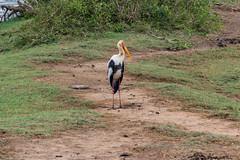 Sri Lanka, Southern Province, Hambantota (Yala National Park) (gerag [Georg Ragaz]) Tags: nationalpark srilanka yala hambantota southernprovince lk