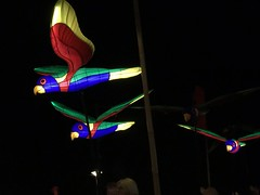 moon lantern festival 2018-23 (bill doyle [mobile]) Tags: moonlanternfestival color iphone7plus 2018 colorful elderpark billdoyle adelaidefestival ozasia lights communityevent southaustralia southaustralian community ozasiafestival sa lanternparade moonlantern adelaide colourful colour lantern iphone7 parade