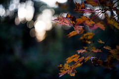 (cara zimmerman) Tags: helios leaves fall autumn ima 100acres 100acrewoods