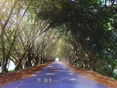 Tree road🌿🌱 (ccps2266ivan) Tags: pingtung taiwan 日常 攝影 treeroad vsco snapseed flickr love happy life dream like4like f4f instagood ig photo shot iphone tree 隧道 樹蔭 樹 路