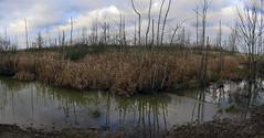 Polder Bazel - Belgium (roland_tempels) Tags: supershot nature polder bazel belgium water reed clouds