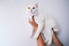 Adorable animal  cat (davidstewartgets) Tags:
