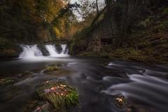 Pisueña (Marce Alvarez.) Tags: nikon otoño largaexposicion cantabria cantabriainfinita bosque rio vallespasiegos paisaje pisueña
