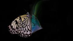 rc_wildlife_39 (R.C. Reshel) Tags: wildlife animals tiere aquarium bauernhof ozean säugetiere vögel insekten schmetterlinge fische schmetterling falter baumnymphe