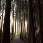 Forest Mist thumbnail