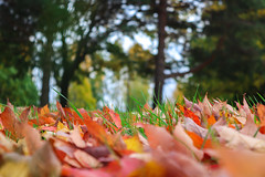 Fall Colors by Liesl-4