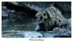 monstre & co (gimi.bene) Tags: étrange nature natur eau extérieur river rivière artistique bleu