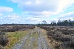 Drenthe (The Netherlands) - Nieuw-Balinge - Mantingerveld - 8 (Björn_Roose) Tags: bjornroose björnroose drenthe nederland netherlands niederlände paysbas nieuwbalinge heath heide