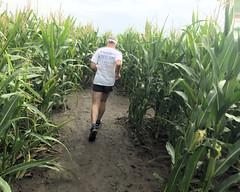 010 Picking Up Some Speed (saschmitz_earthlink_net) Tags: 2018 california temecula bighorsefeedandmercantile cornmaze orienteering laoc losangelesorienteeringclub corn