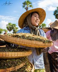 Peanut Winnowing (Bagan, Myanmar 2013) (Alex Stoen) Tags: 1dx alexstoen alexstoenphotography bagan burma canon canoneos1dx geotagged myanmar natgeo nationalgeographicexpeditions portrait travel vacation