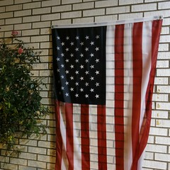 Daily Colours - After the Vote (Pushapoze (MASA)) Tags: flag drapeau bandera electionday roses rain pluie evening soir explore
