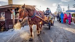 Winter in Zakopane (1maarten) Tags: horse zakopane poland ride snow winter
