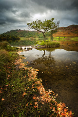 autumn leaves at rydal water (akh1981) Tags: amateurphotography autumn beautiful benro cumbria clouds calm countryside colour fells hiking nikon nisi nature nationalpark nisifilters nationalheritage nationaltrust nationalheritagesite mountains moody morning uk unesco outdoors wideangle walking water sky travel tranquil tree landscape lakedistrict lake lakeside rocks reflections