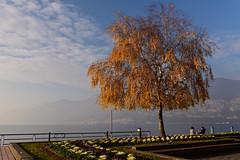 Lago d'Iseo, Italy,  December 2018_039 (tango-) Tags: iseo lagoiseo iseolake lagodiseo lombardia italia italien italie italy