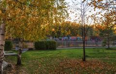 Autumn in the park / Осень в парке (dmilokt) Tags: природа nature пейзаж landscape лес forest дерево tree dmilokt nikon d750