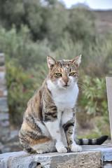 fullsizeoutput_90bf (lnewman333) Tags: sifnos siphnos greece europe cyclades aegeansea faros island beach apokoftobeach cat tabby straycat feline