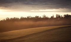 Barley and mist. (Skye Auer) Tags: farm crop mist morning dawn storm rural agriculture barley landscape colour skyeauer