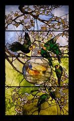 Louis Comfort Tiffany, Parakeets and Gold Fish Bowl, 1889 5/12/18 #mfaboston #artmuseum #stainedglass #tiffanywindow (Sharon Mollerus) Tags: boston museumoffinearts massachusetts unitedstates us cfptg18
