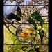 Louis Comfort Tiffany, Parakeets and Gold Fish Bowl, 1889 5/12/18 #mfaboston #artmuseum #stainedglass #tiffanywindow