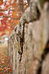 (Kylee Vincent Photography) Tags: newengland cemetery halloween fall autumn orange red yellow fallenleaves leaves leaf nikon d90 bokeh spooky grave headstone nikond90 kyleeuliano kyleevincent photography graveyard ghostly pretty gloomy gloom massachusetts ma newbedford newbedfordma newbedfordmassachusetts foliage kylee uliano vincent photo cemeteries