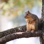 136/365/3788 (October 25, 2018) - Squirrels in Ann Arbor at the University of Michigan - October 25th, 2018 thumbnail