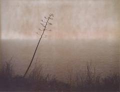 Edge of the World (H Polley) Tags: californiacoast polaroidweek polaroid roidweek instantfilm type100 packfilm peelapart 360landcamera bigsur