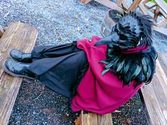 sleepy crow (SetsuntaMew) Tags: parenfaire renfaire faire festival pennsylvania pa fall autumn